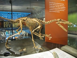 10 More Awesome Dinosaur Facts: Velociraptor