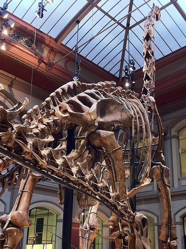 Why were dinosaurs so big?