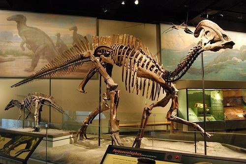 parasaurolophus-skeleton.jpg