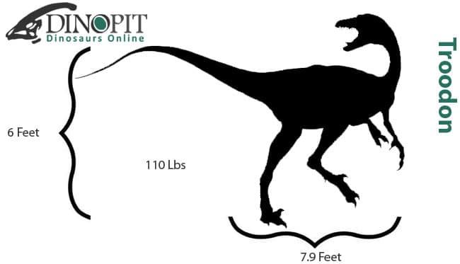 Troodon size