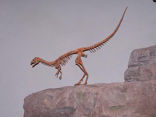Compsognathus Habitat A Jurassic Archipelago Dinopit Com