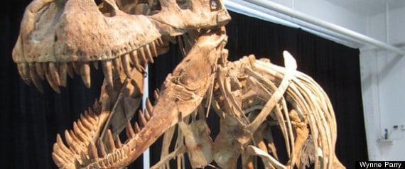 Mongolian dinosaur remains
