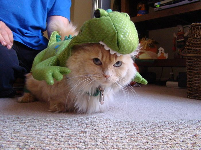 Animals Dressed As Dinosaurs: Rex Cat