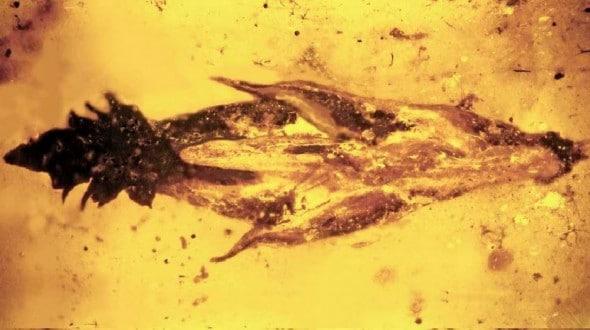Did Dinosaurs Get High From Ergot?